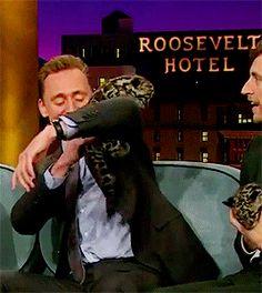 Tom Hiddleston gatto